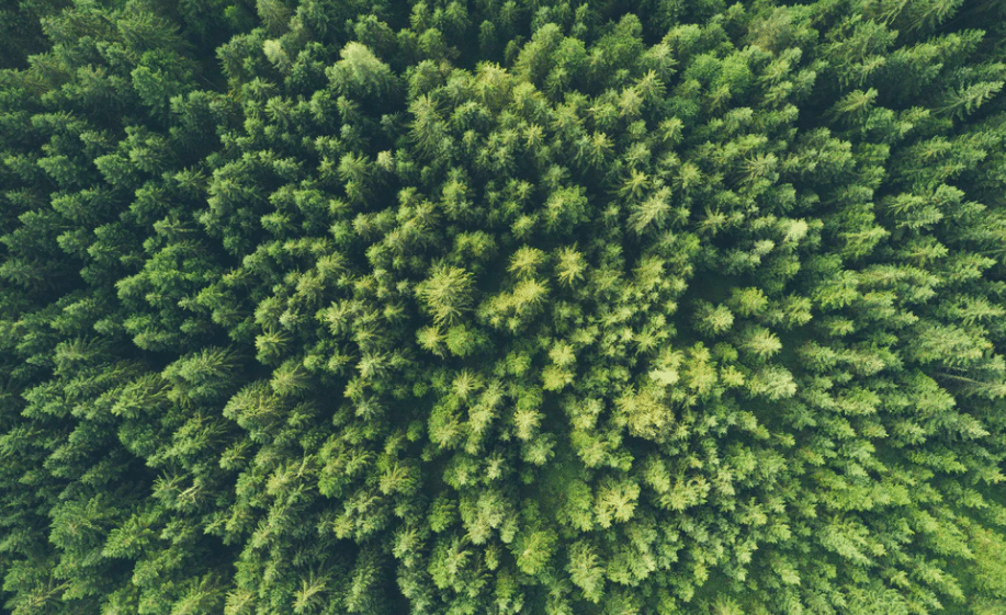 skog klimatkompensera