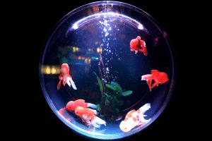 Mötesformer fishbowl fiskskål