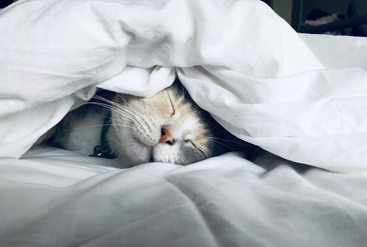 Katt som sover under vitt täcke
